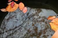 Erste Blätter im Regenwasserspeicher